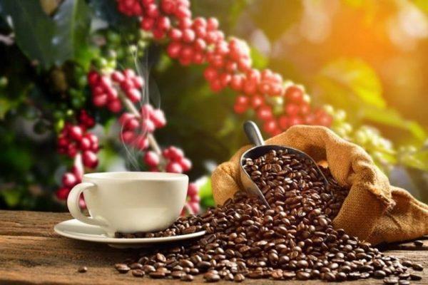 giới thiệu cà phê An Hưng